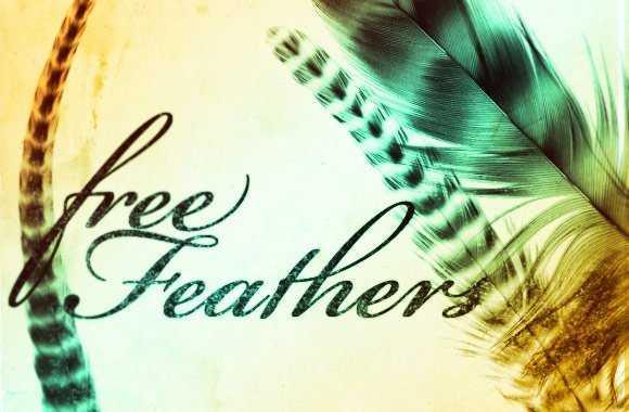 Set de pinceles de plumas para Photoshop