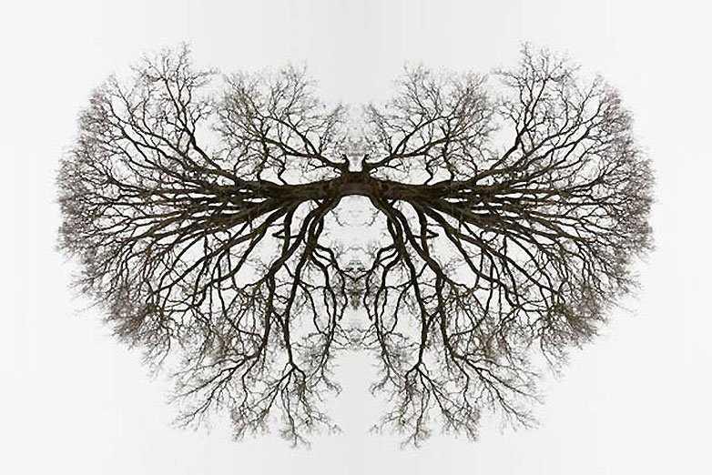 Espectaculares fotos con efecto espejo